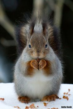 Have you ever sat and watched a squirrel eat? Fascinating....