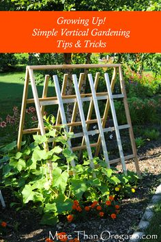 Growing UP! Simple Vertical Gardening Tips & Tricks