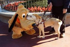 oldblacklung:  yellowkiddo:  Guide dog meets special pal at Disneyland  ☺️
