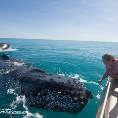 It's certainly a nice time in Broome at the moment to be people watched by the Whales #broome#theKimberley#kimberleywhales#australia#cablebeach#whale#seashepherd#amazingwa #Padgram