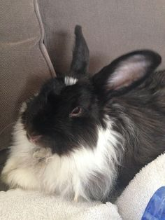 EB Rabbit | Pawshake Glen waverley