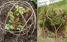 De simpleste plante understøtninger