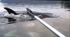 These Guys Were Paddling Around In A Little Boat When Something Terrifying Happens - NewsLinQ