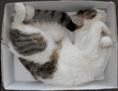 Sleeping in a box...
