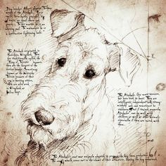 """""""Airedale Face"""" Detail of a Da Vinci style drawing"""