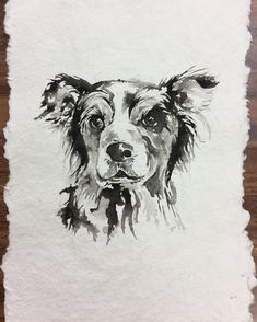 Bandit the Border Collie Watercolor by Gi Jager Studio