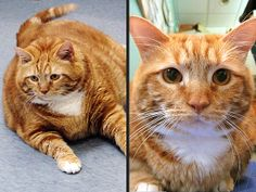 Thin-spiration 2014: Pets Who Achieved Double Digit Weight Loss| Cats, Dogs, Unusual Pets, Cute Pets, Funny Pets, Pet and Animal Stories