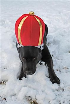 Doozer's a good sport to put on the King's hat to go out to play in the snow on Tiger Mountain in Issaquah! - masonent