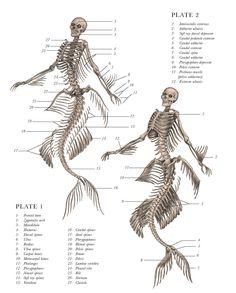 Eric Hudspeth: Mythological Creature Skeletons (PHOTOS)