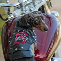 Your pooch will be the talk of the town in this stylish Black Biker Dog Motorcycle Jacket. Please see size chart for approximate sizing guidelines