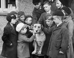 20th April 1936: A group of children in Brentwood, United Kingdom, organized a collection for an injured dog called Bob, who would have been destroyed because he had no owner to pay for his treatment. (Derek Berwin/Fox Photos/Getty Images)