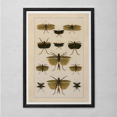 VINTAGE NATURE PRINT- Antique Nature Print - Insect Print Butterfly Art Antique Natural History Print Wall Art Natural History Art
