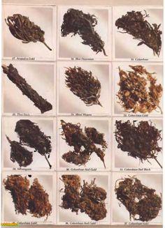 #w33daddict #Marijuana #Sinsemilla #Herb #Strain #Reviews #Pictures #Landrace #Hashish #Hash #Colombian #Hawaian #Jamaican #Mexican #PanamaRed #AcapulcoGold ...