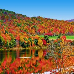 Western New York! A beautiful part of NY state and our great country. This colorful display is the result of the great variety of broad-leaved trees.