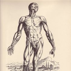 I like the idea of using vintage anatomy prints in my massage room.