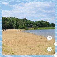 Ruislip Lido - Best dog friendly things to do in London