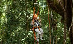 CRITICS' CHOICEJudi Dench's Wild Borneo Adventure (ITV, There are sun bears and orangutans to be seen on this trip to the Borneo rainforest, but it's not just the big-ticket animals that catch