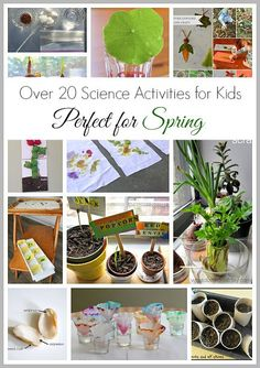 20+ Spring Science Activities for Kids: planting seeds, gardening, butterflies, and more!