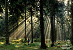 """""""Erzgebirgischer Waldwichtel, fotografiert an einem März Morgen 2012 Nähe Jugendherberge Hormersdorf.""""  © Andrea Suesselbeck"""