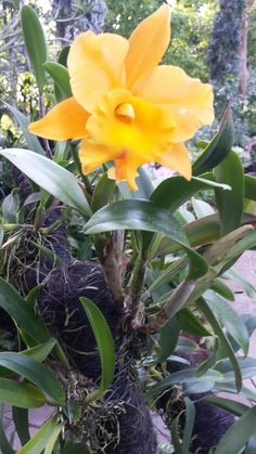 Amazing Unusual Plants To Grow In Your Garden Exotic Flowers, Yellow Flowers, Beautiful Flowers, Orchid Seeds, Orchid Plants, Virtual Flowers, Large Flower Pots, Types Of Orchids, Rare Orchids