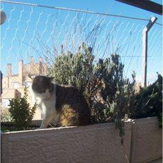 Red Seguridad Gatos Protección Terrazas Cat Ekosystem