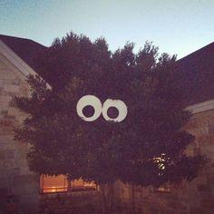Big tree eyes!!