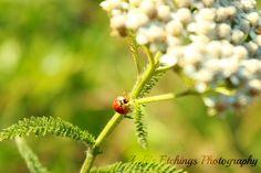Ladybug - 8x10 Nature Shot. $25.00, via Etsy.