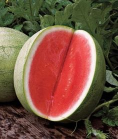 Watermelon Seedless Big Tasty Hybrid | Garden Seeds and Plants