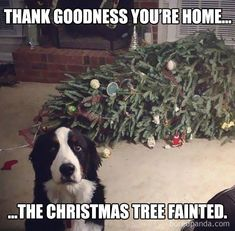 23 Holiday Animal Memes As A Forewarning Of What's To Come And To Bring You Joy, Obviously - Funny stuff - Animals Pictures Funny Dog Memes, Funny Animal Memes, Cute Funny Animals, Funny Animal Pictures, Funny Dogs, Funny Pictures Hilarious, Cat And Dog Memes, Funny Animals With Captions, Funny Puppies