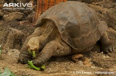 RIP Lonesome George :(
