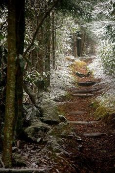 Snow Trail, The Smokey Mountains, Tennessee Hiking Usa, Thru Hiking, Hiking Trails, Forest Path, Forest Garden, Garden Paths, Fantasy Landscape, Landscape Design, Smoky Mountains Hiking