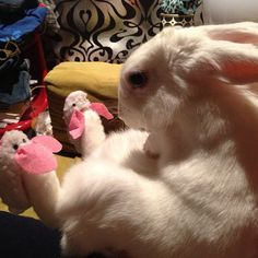 Bunny in bunny slippers. Photo by albirabbit. Cute Bunny e568e8ef8ce1