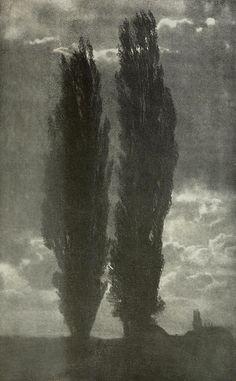 vertigo1871:  Two poplars, 1907Martin Müller, photography