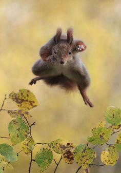 野生動物写真家は、人智を超えた地球の生命の尊厳を捉えたい…でも時にはそんな野生動物のお茶目な瞬間が切り取れてしまうこともありますよね。 タンザニアを拠点に活動する野生動物写真家 Paul Joyns