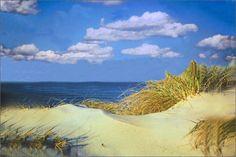 cape cod sand dune