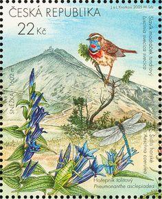 Czech Republic: Birds , Pnemonanthe asclepiada, Aeschna coerulea and Luscinia Svecica Svecica - (Salgueiro genciana, Montanha sovela e Pisco-de-peito-azul)