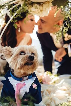 Wedding Pets: Gorgeous Photo Ideas For Your Album ❤ See more: http://www.weddingforward.com/wedding-pets/ #wedding #pets