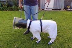 'Bazz' exibe sua roupa de apicultor na cidade australiana de Tintinara (Foto: Josh Kennett/Reuters)