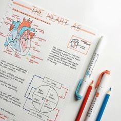 The heart is probably one of my favourite topics in biology – what's yours? – … The heart is probably one of my favourite topics in biology – what's yours? Nursing School Notes, College Notes, Medical School, School Organization Notes, Study Organization, Cute Notes, Pretty Notes, Beautiful Notes, Good Notes
