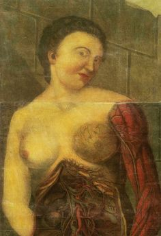 Época victoriana médica anatomía femenina anatomía por WeLoveCMYK