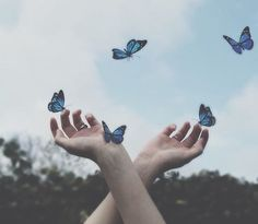 Magic Great Tagged with beauty blue butterfly cute green grunge hands magic photo sensitive simple sky Blue Aesthetic Pastel, Aesthetic Colors, Aesthetic Vintage, Aesthetic Photo, Aesthetic Pictures, Blue Aesthetic Tumblr, Fae Aesthetic, Photo Wall Collage, Picture Wall