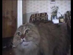 NONONONO Cat (ORIGINAL)