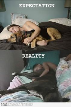 Sleeping with dogs