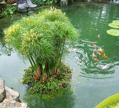 Floating Island Planter - Koi Pond Planter - Backyard Water Garden Ideas - Pond DIY Idea