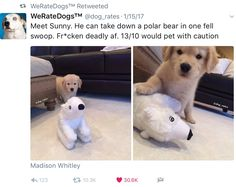 Cute Funny Dogs, Cute Funny Animals, Animal Jokes, Funny Animal Memes, Dog Rates, We Rate Dogs, Happy Puppy, Cute Little Animals, Cute Animal Pictures