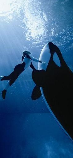"""Swimming with whales: Love these photos: - Genesis 1:20 Then God said: """"Let the waters swarm with living creatures . . 21 And God created the great sea creatures and all living creatures that move and swarm in the waters according to their kinds. And God saw that it was good. 26 Then God said: """"Let us make man in our image, according to our likeness, AND LET THEM HAVE IN SUBJECTION THE FISH OF THE SEA 31 After that God saw everything he had made, and look! it was very good"""