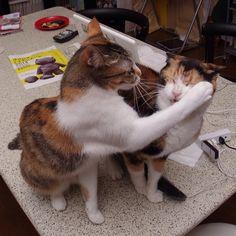"""Hold still. You gotz sumpin stuck on yur fur.""     Castella-chan and Micchan."