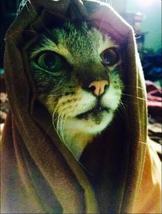 Khajiit has wares if you are willing to buy