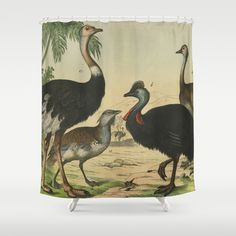 Ostrich and friends shower curtain