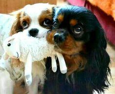 chien trop mignon Dogs Lovers dogslovers.fr/ More More Plus de découvertes sur Le Blog des Tendances.fr #tendance #cute #animaux #blogueur